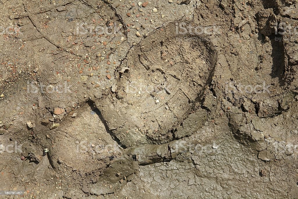 Shoeprint in mud royalty-free stock photo