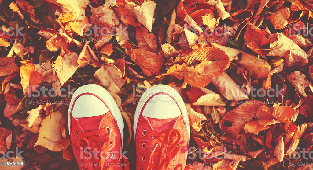 Shoes red shoes in autumn leaves stock photo