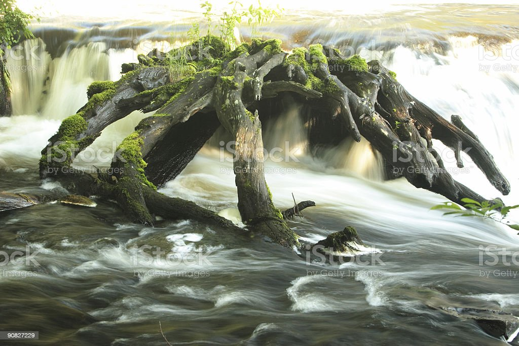 Shohola Falls with Tree Stump royalty-free stock photo