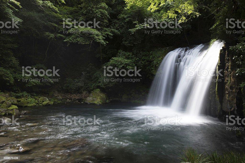 Shokei-Daru stock photo