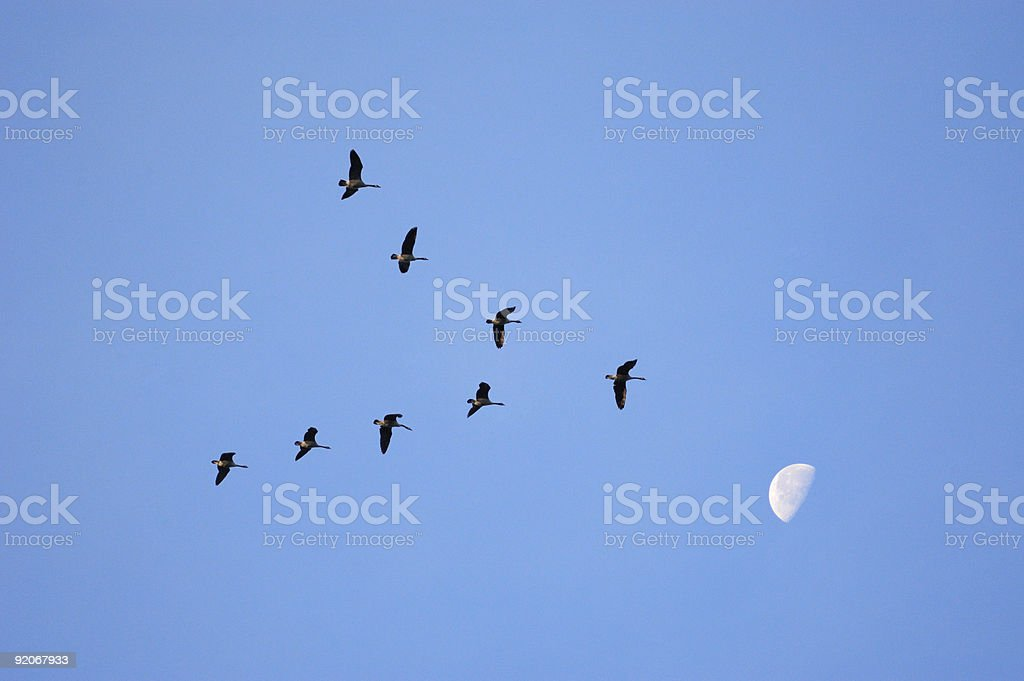 Shoot for the Moon royalty-free stock photo