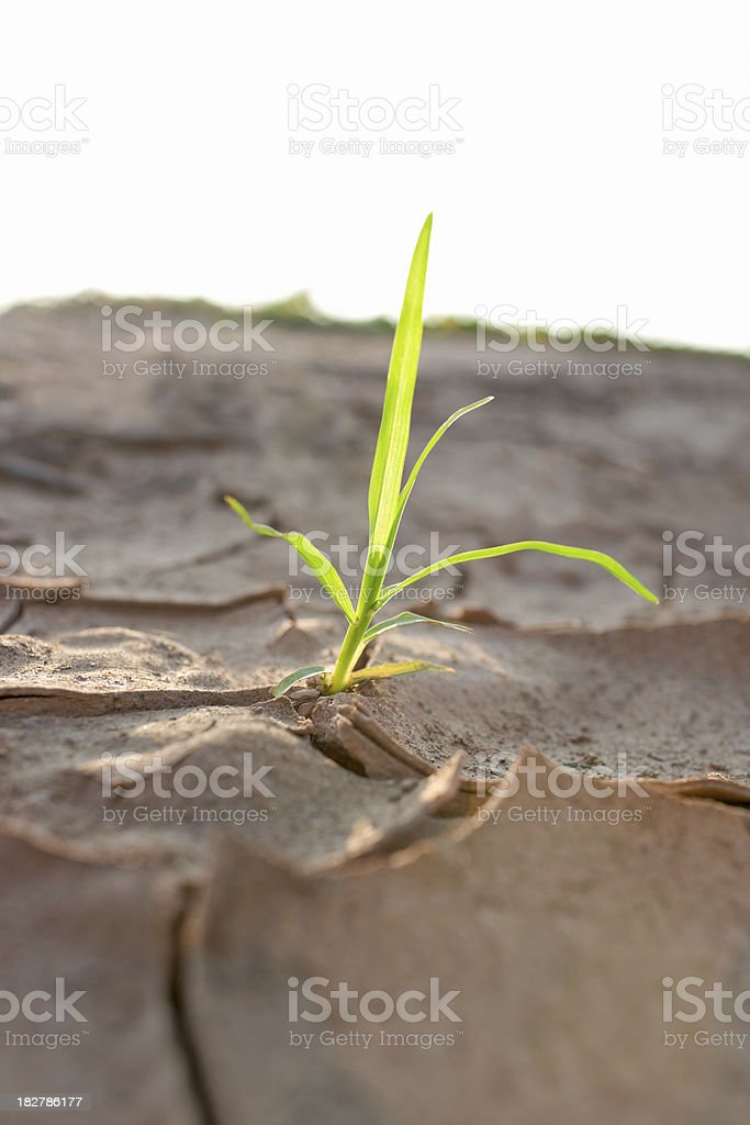 Shoot growing through parched earth. royalty-free stock photo