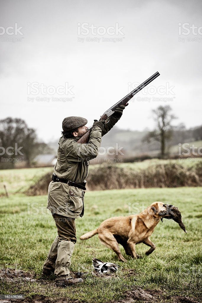 Shooting duck, gundog retrieves stock photo