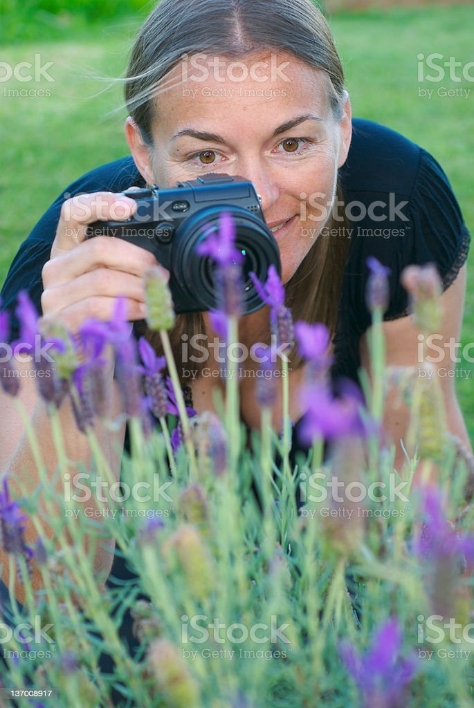Shooting lavender 4 royalty-free stock photo