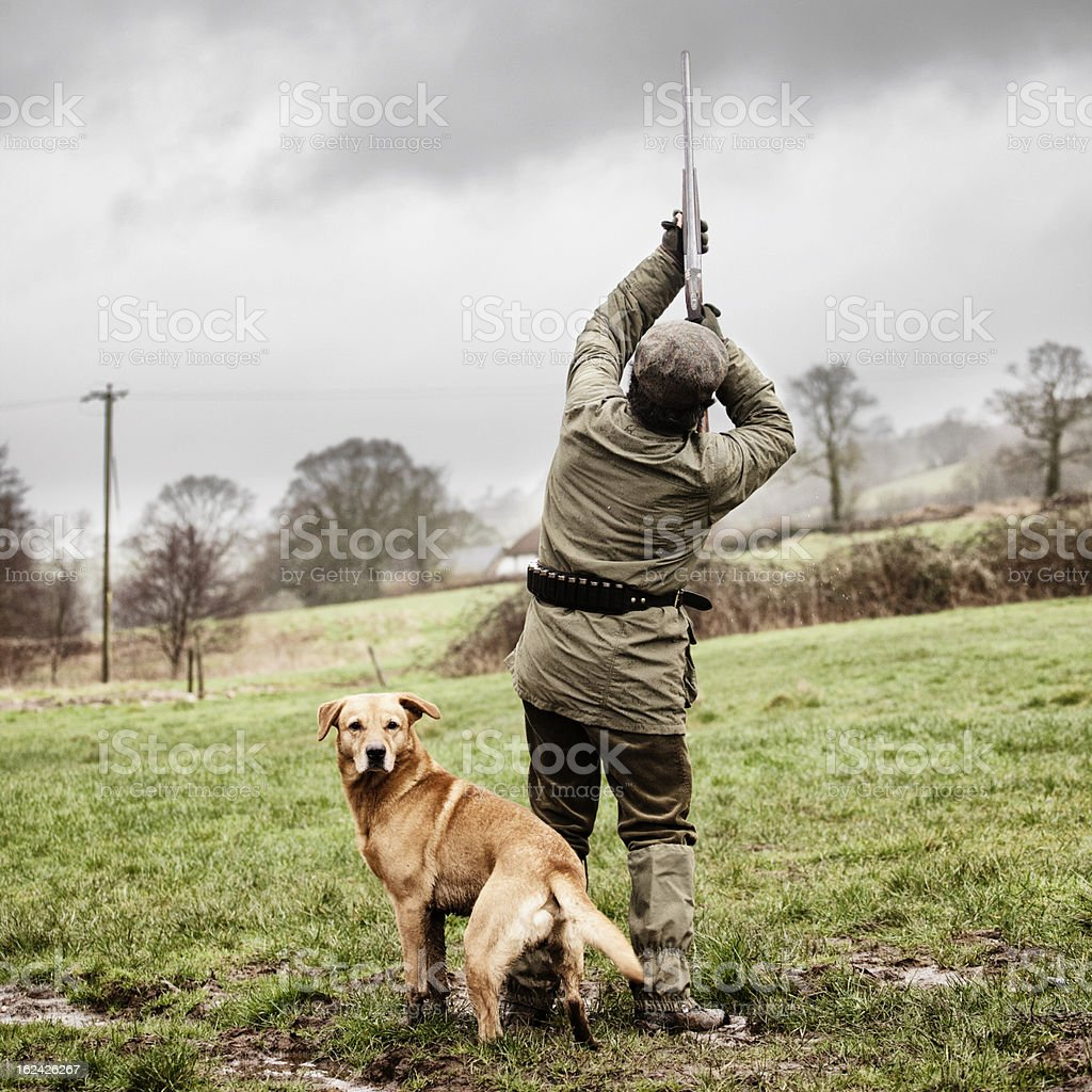 Shooting pheasant, with dog royalty-free stock photo