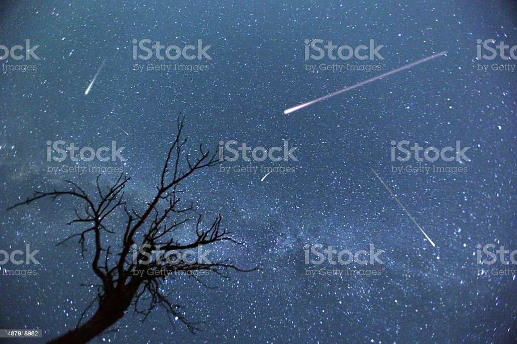 Composite image of shooting stars with a silhouette of a small tree...