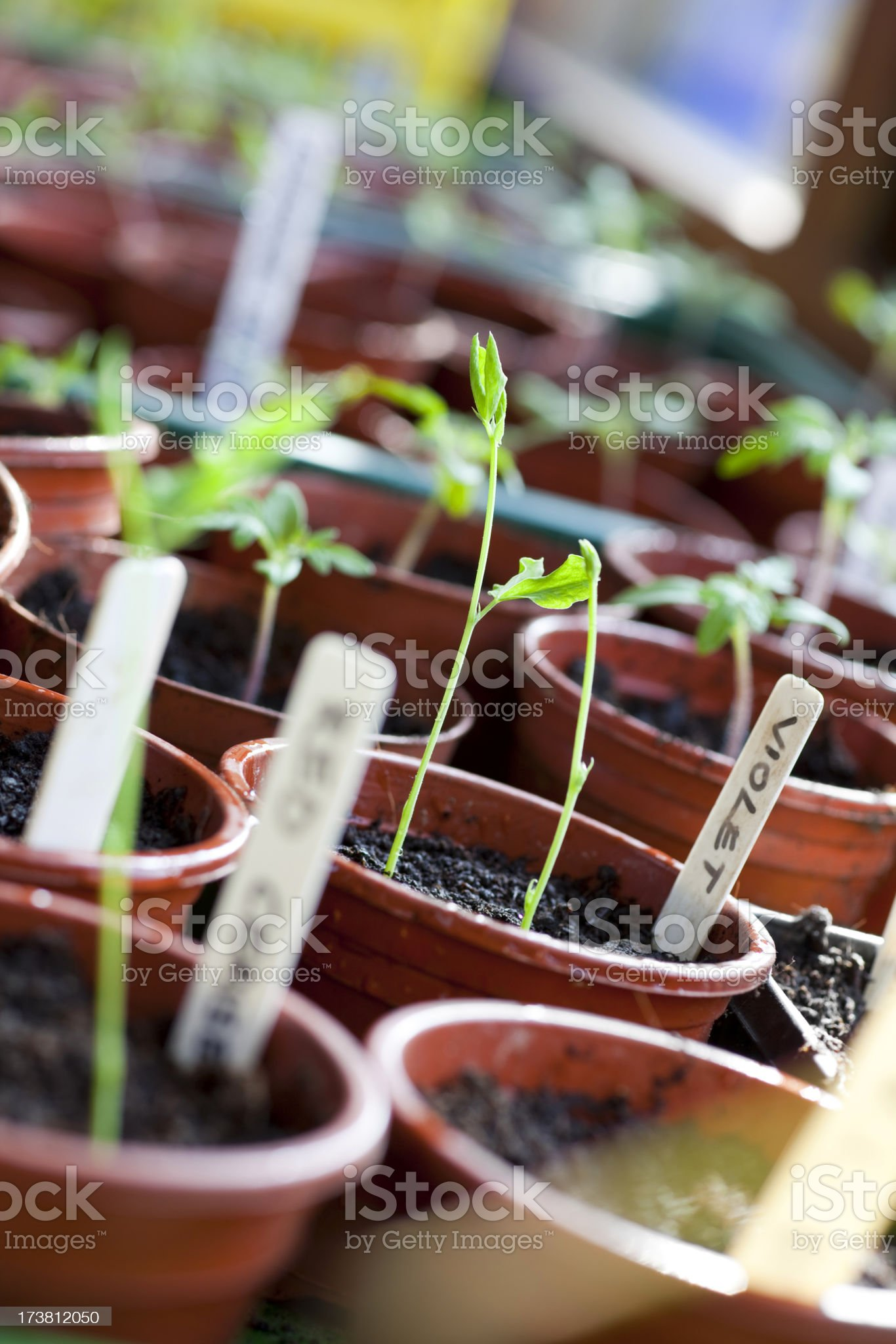 Shoots in the Potting Shed royalty-free stock photo