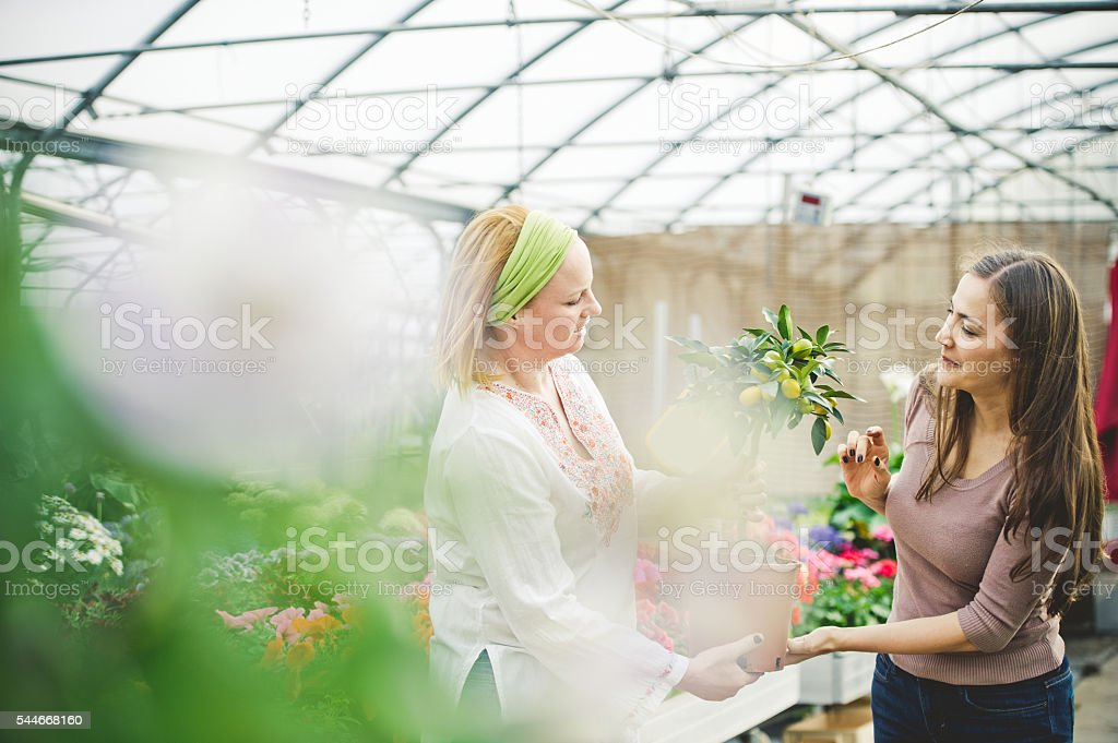 Shopping a Lemmon tree in a Greenhouse stock photo