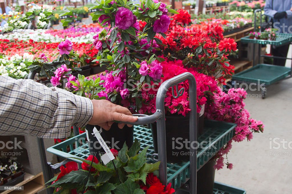 Shopping For Flowers royalty-free stock photo