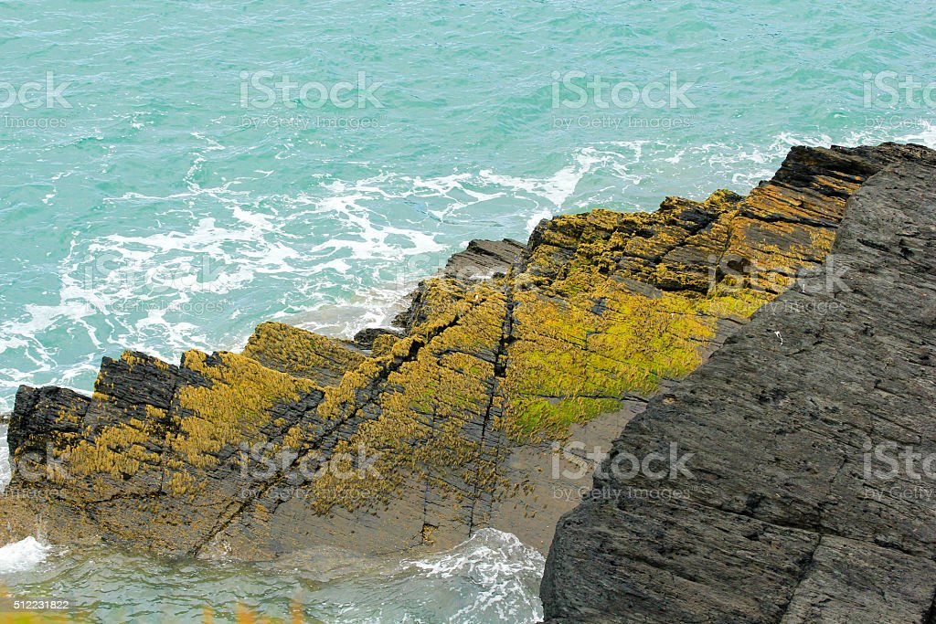 Shore Lichen in Wales, UK stock photo