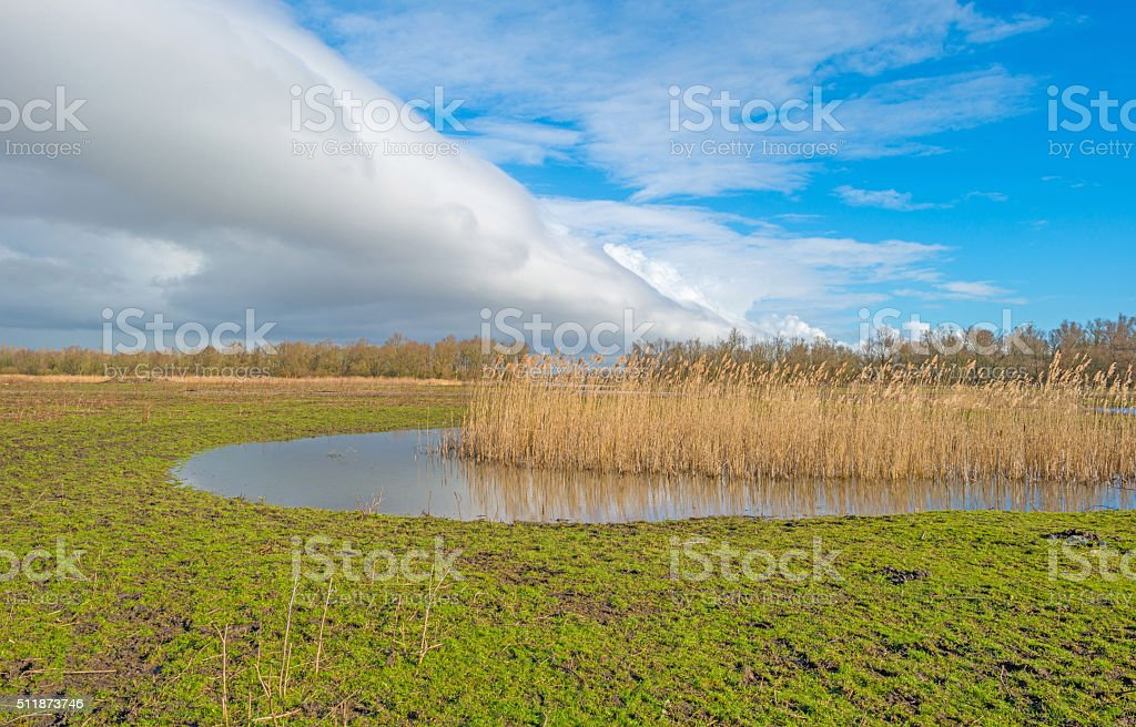Shore of a lake in sunlight in winter stock photo