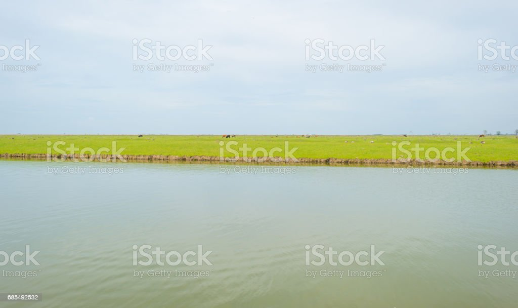 Shore of a lake in wetland in spring stock photo