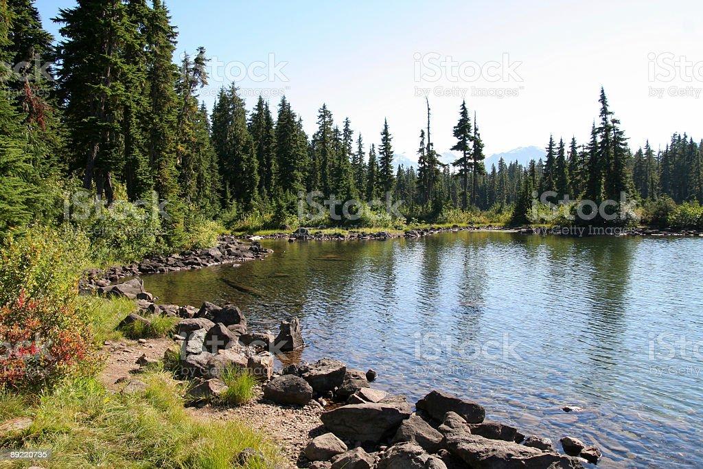 Shore of Callaghan Lake royalty-free stock photo