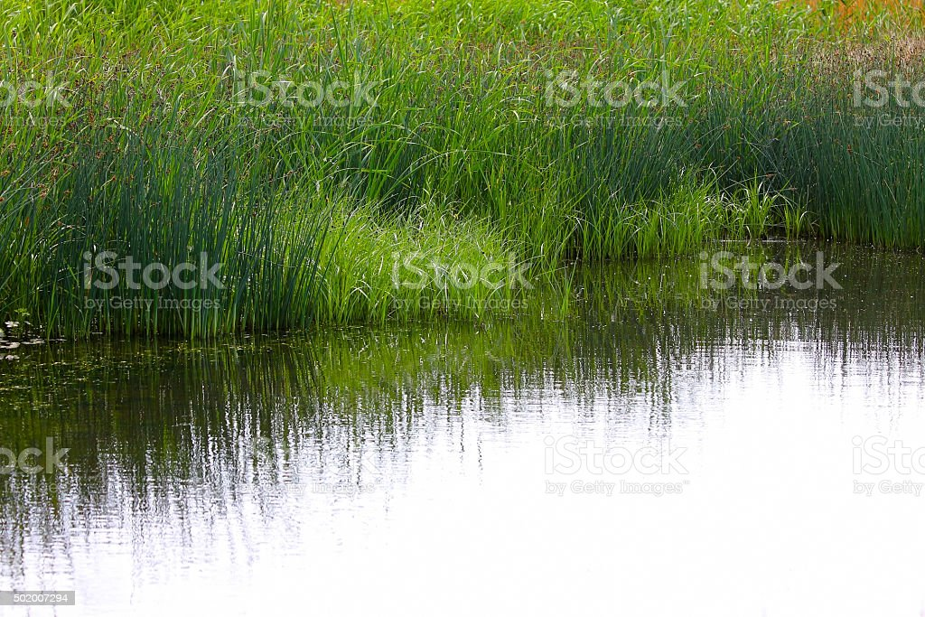 Shore of the reservoir covered with green grass stock photo