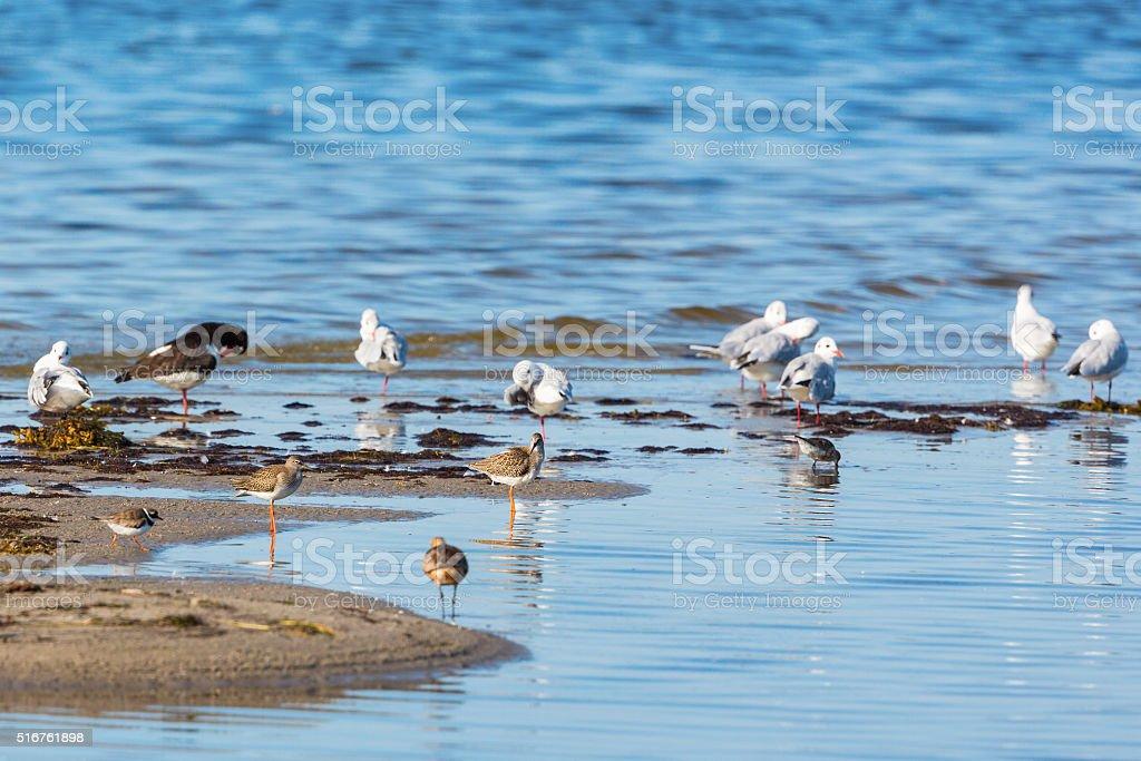 Shorebirds stock photo