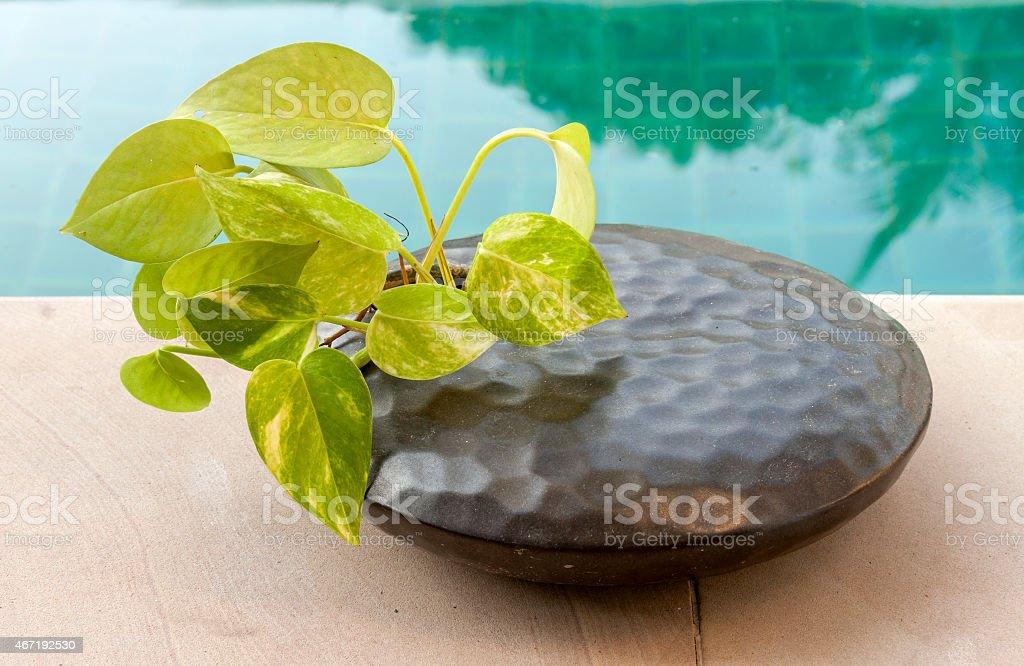 Short round black vase royalty-free stock photo