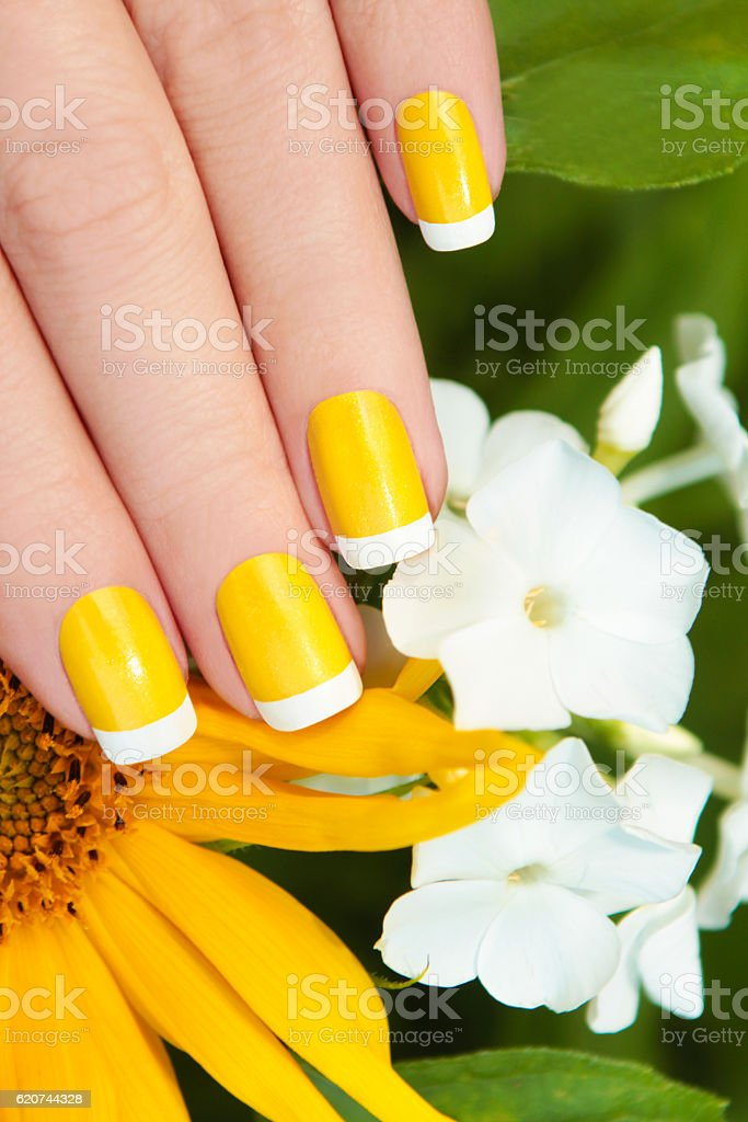 Short yellow French manicure. stock photo