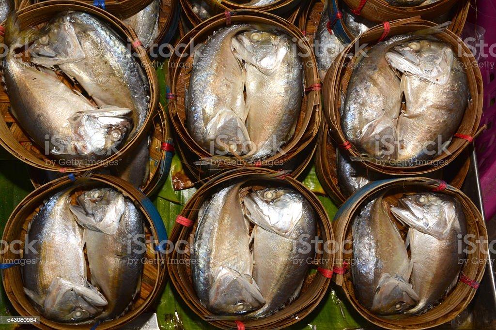 short-bodied mackerel stock photo