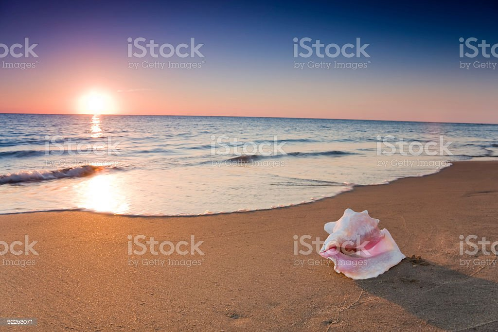 A shot of a conch shell on a beach evening stock photo