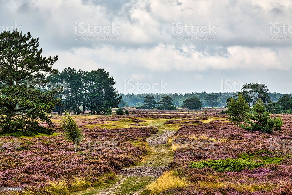 HDR shot of Hiddensee heath with pine trees and cloudscape stock photo