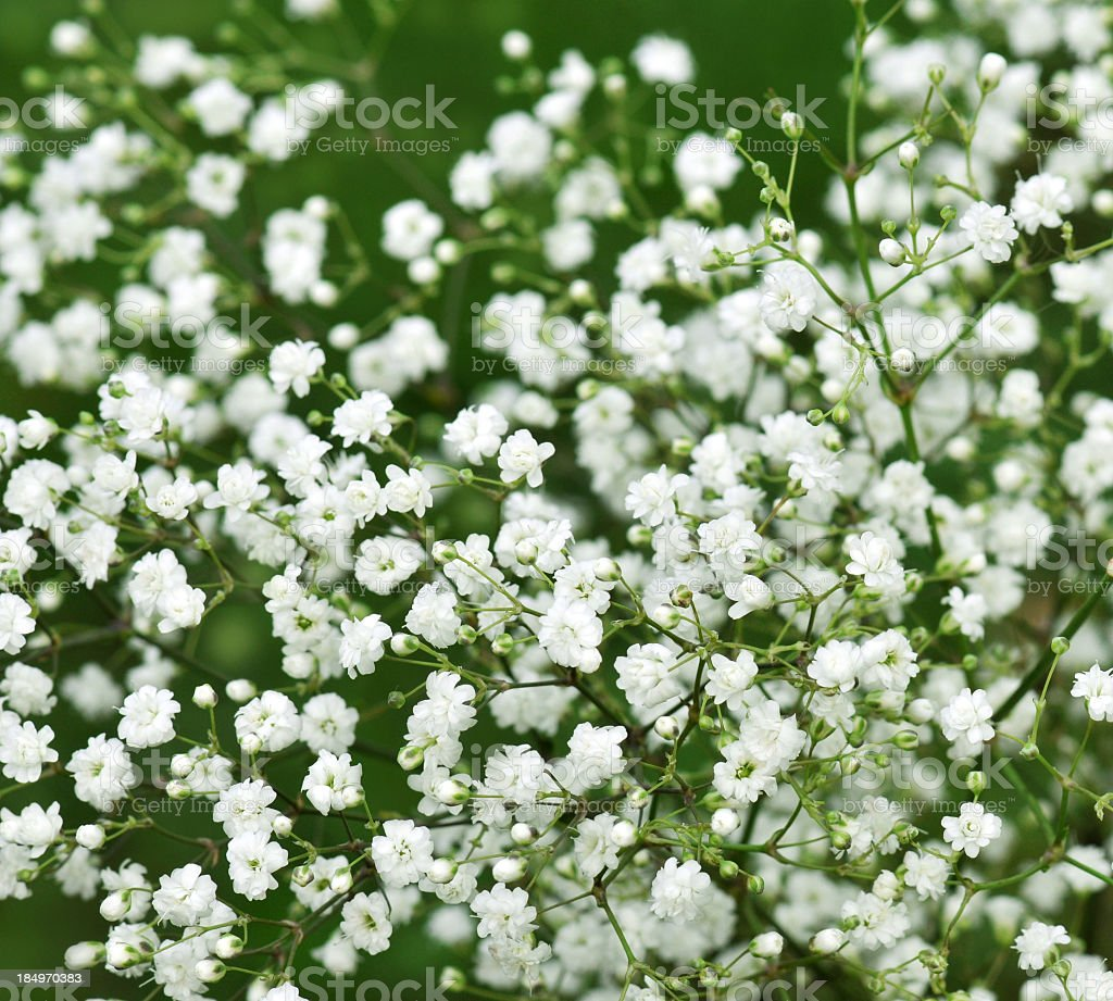 A shot of many flowers in a healthy field stock photo