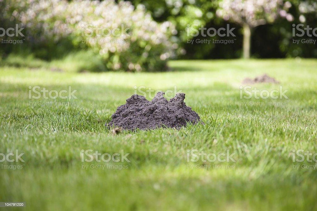 Shot of mole mound on green grass stock photo