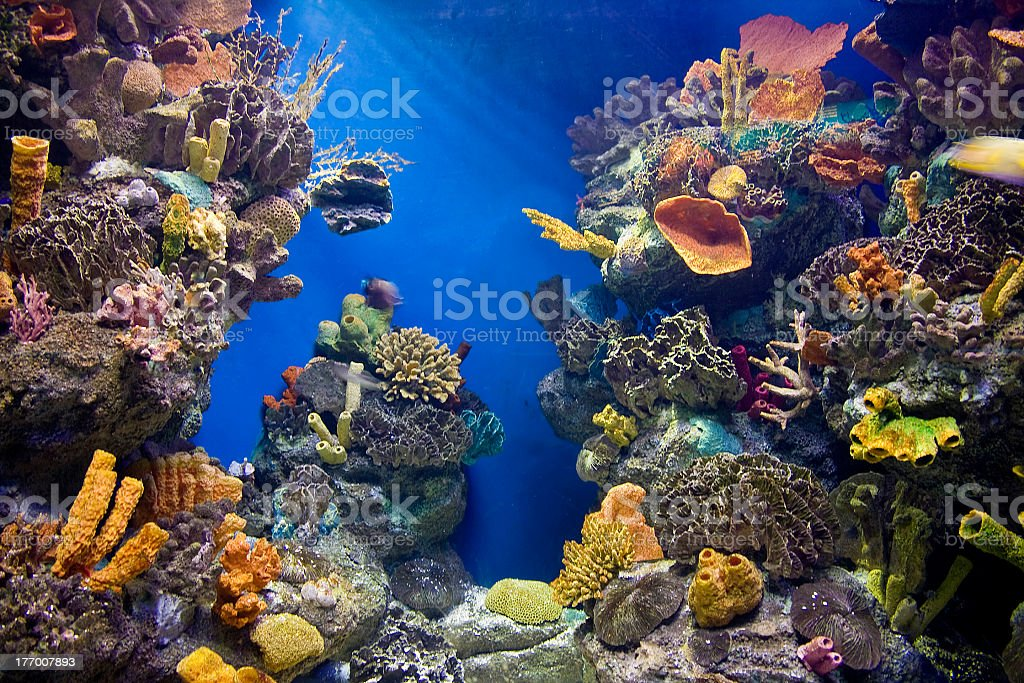 Shot of the colorful inside of an aquarium tank stock photo