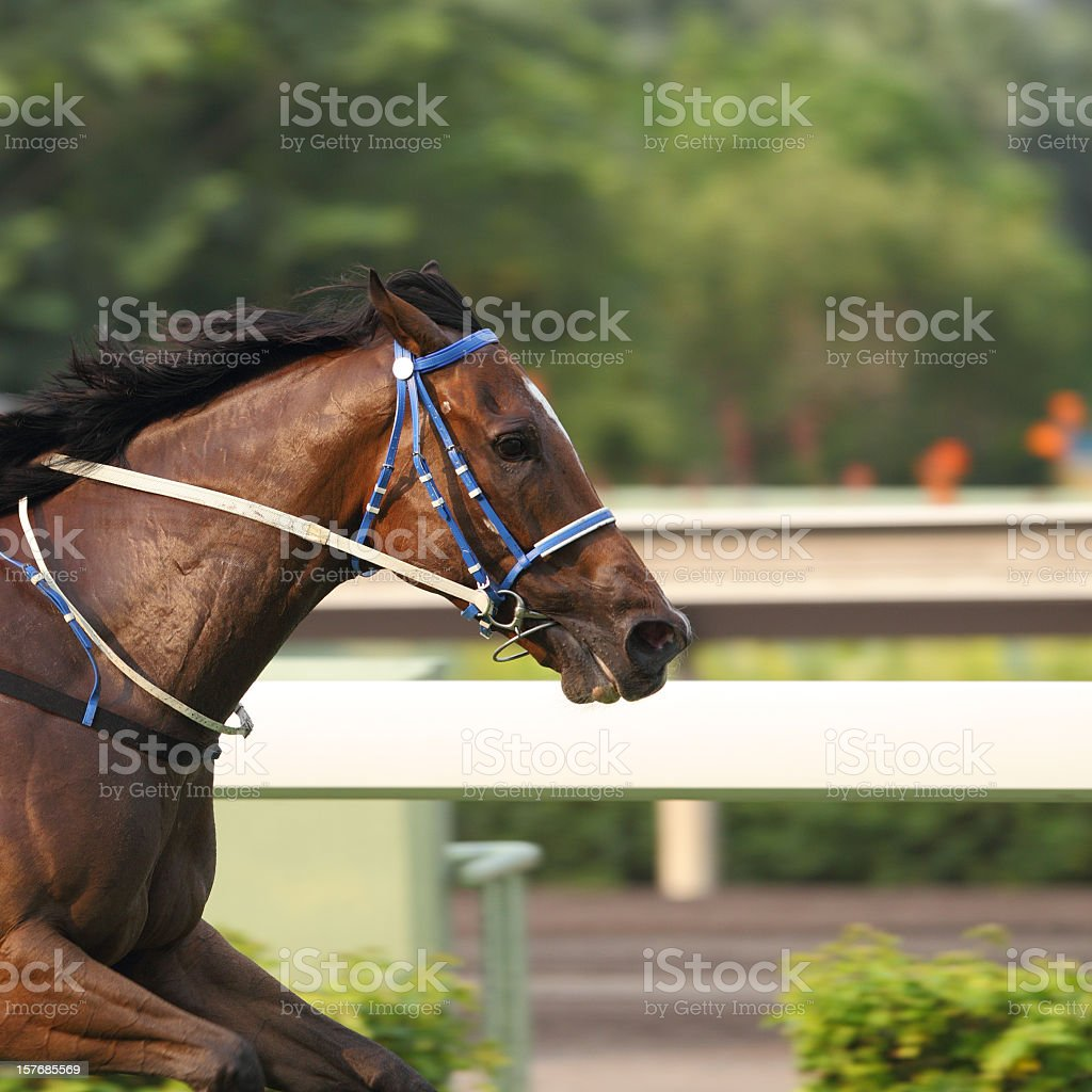 A shot of the front half of a horse racing outdoors  stock photo