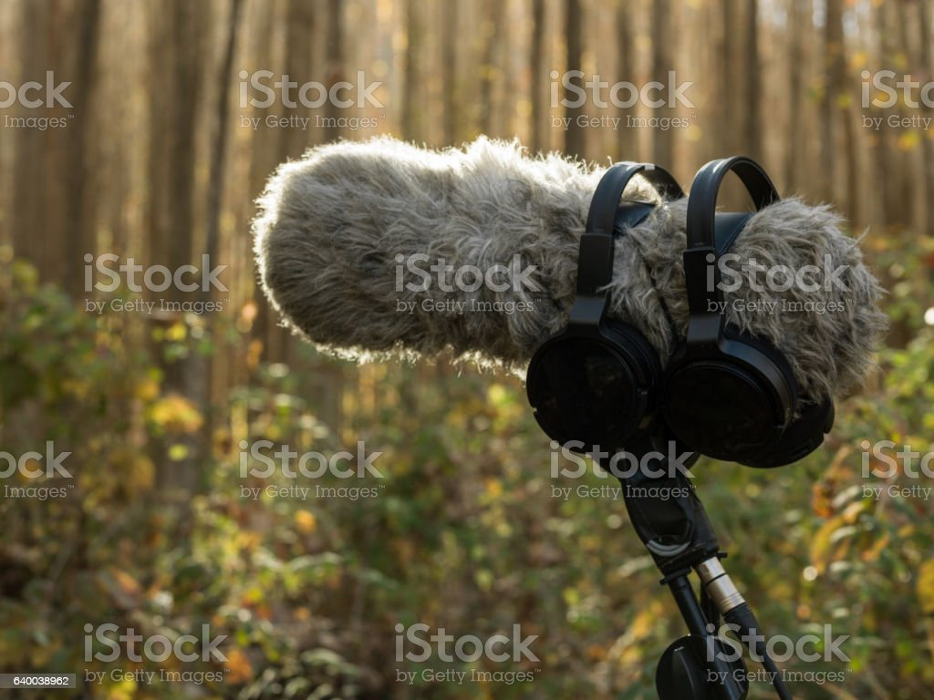 Shotgun Microphone With Windshield In Nature stock photo