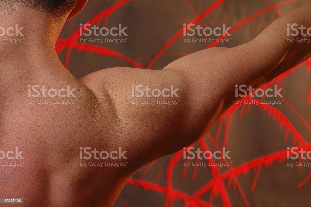 shoulder royalty-free stock photo