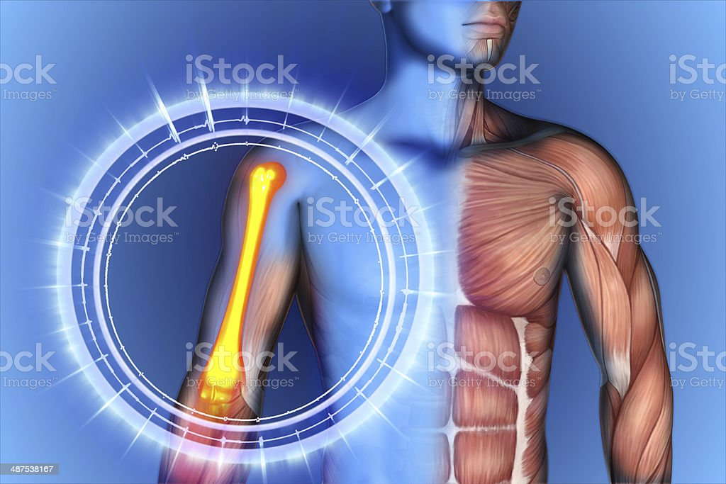 shoulder scapula clavicle royalty-free stock photo