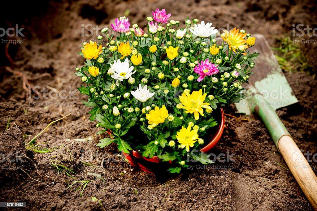shovel and flower pot on sand stock photo