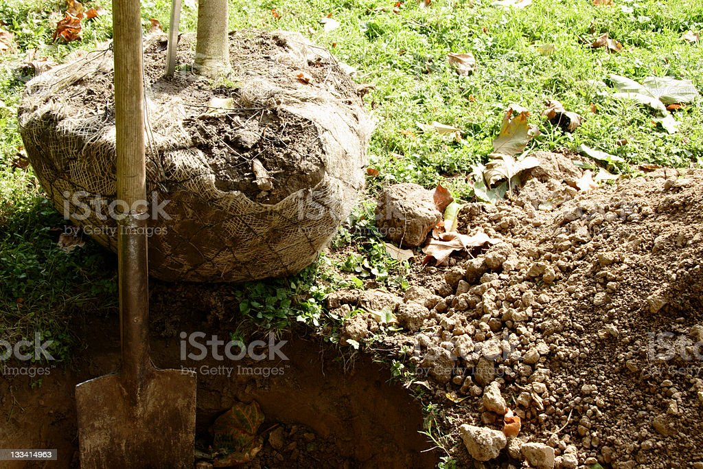 Shovel in freshly dug hole with tree nearby to be planted stock photo