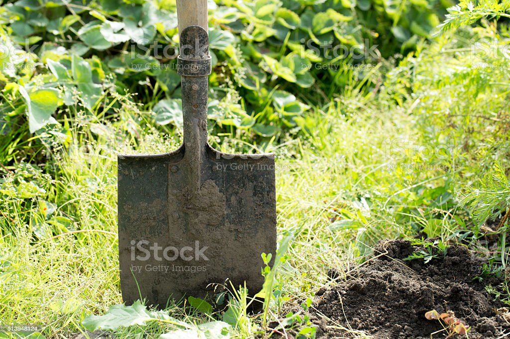 Shovel in the ground stock photo