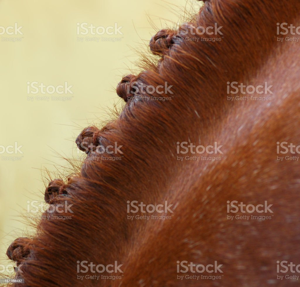 Show Horse Braids stock photo