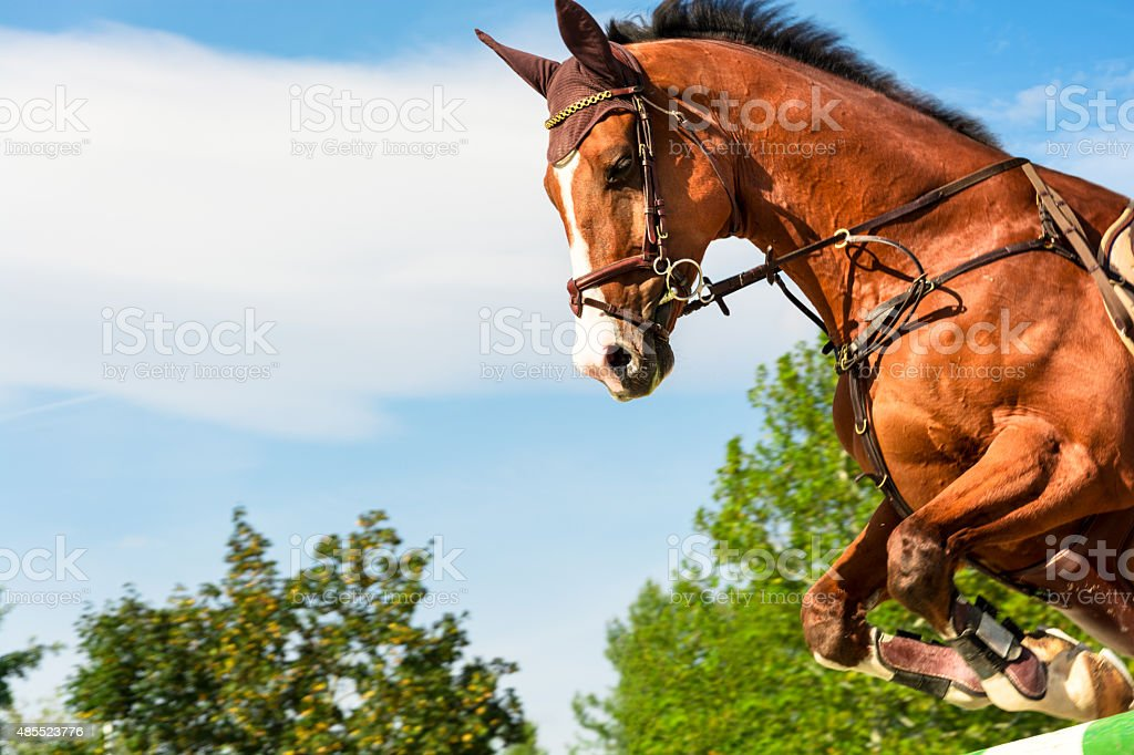 Show jumping - horse jumping over hurdle stock photo