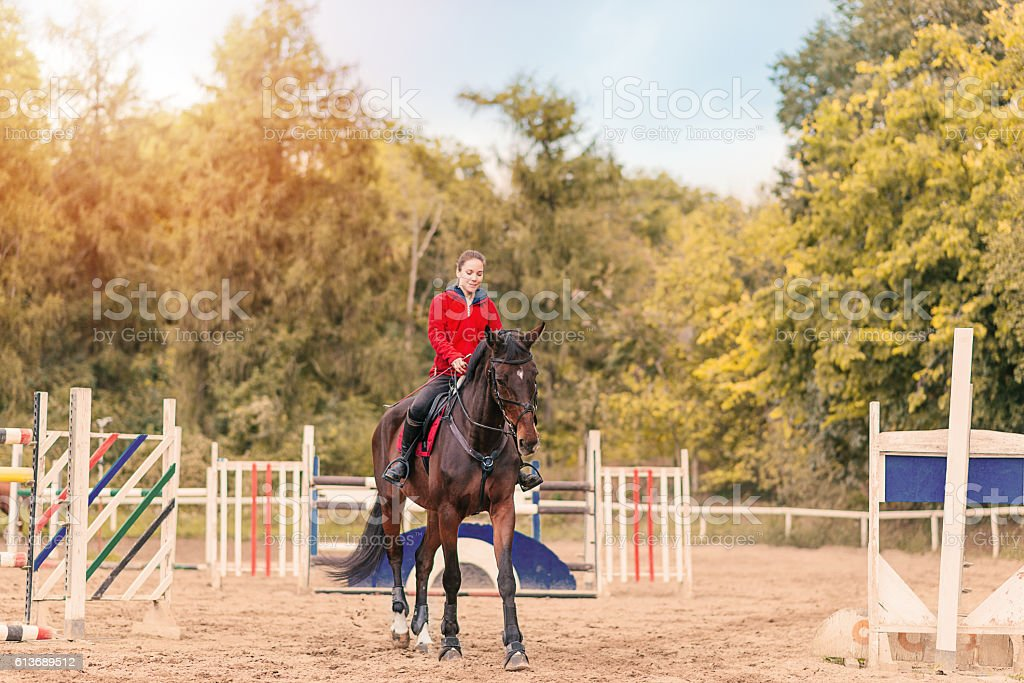 Show jumping horse training stock photo