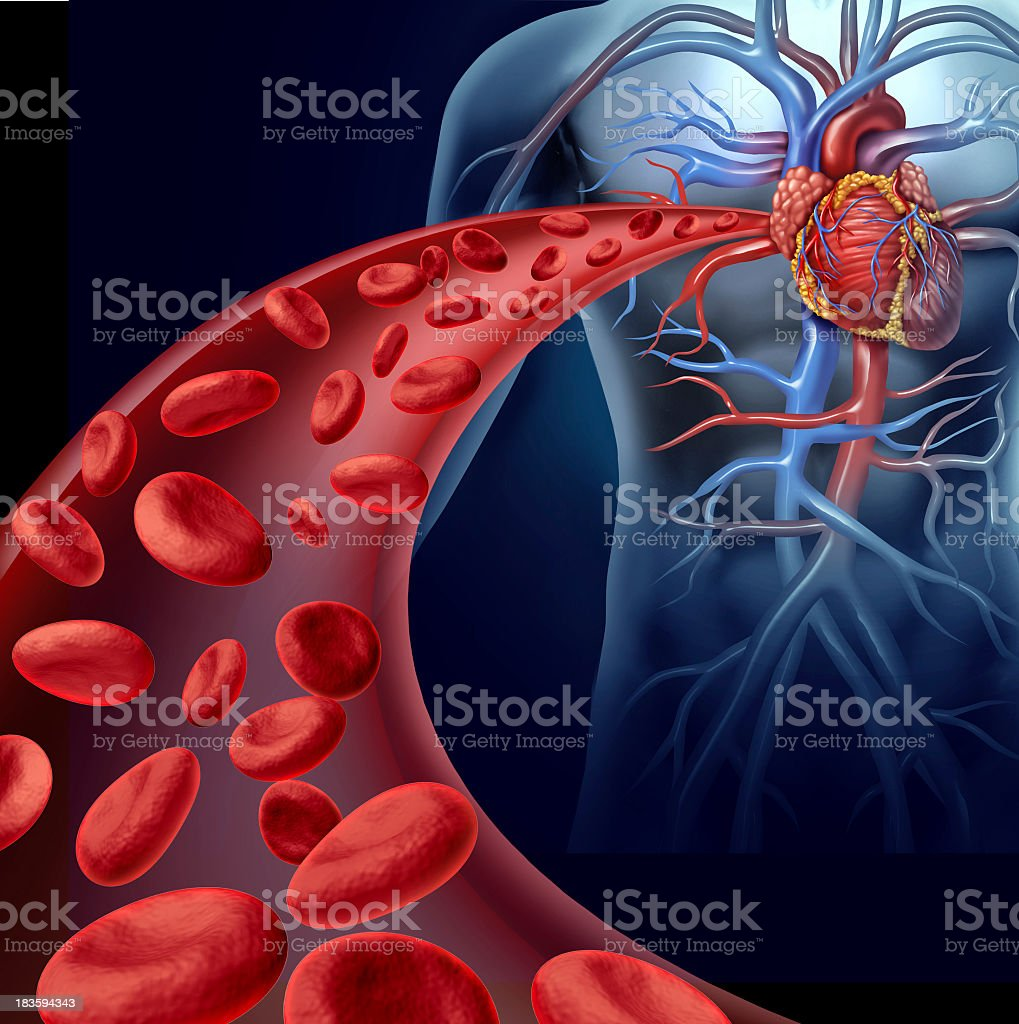 Showing cardiovascular system in a translucent body stock photo