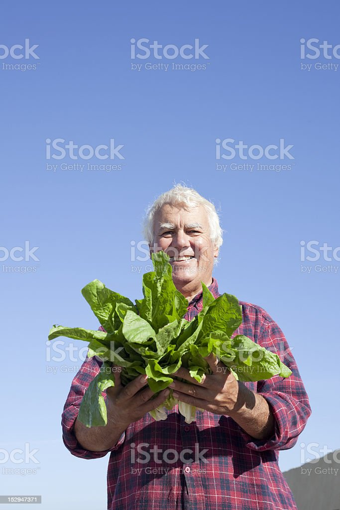 Showing harvest royalty-free stock photo
