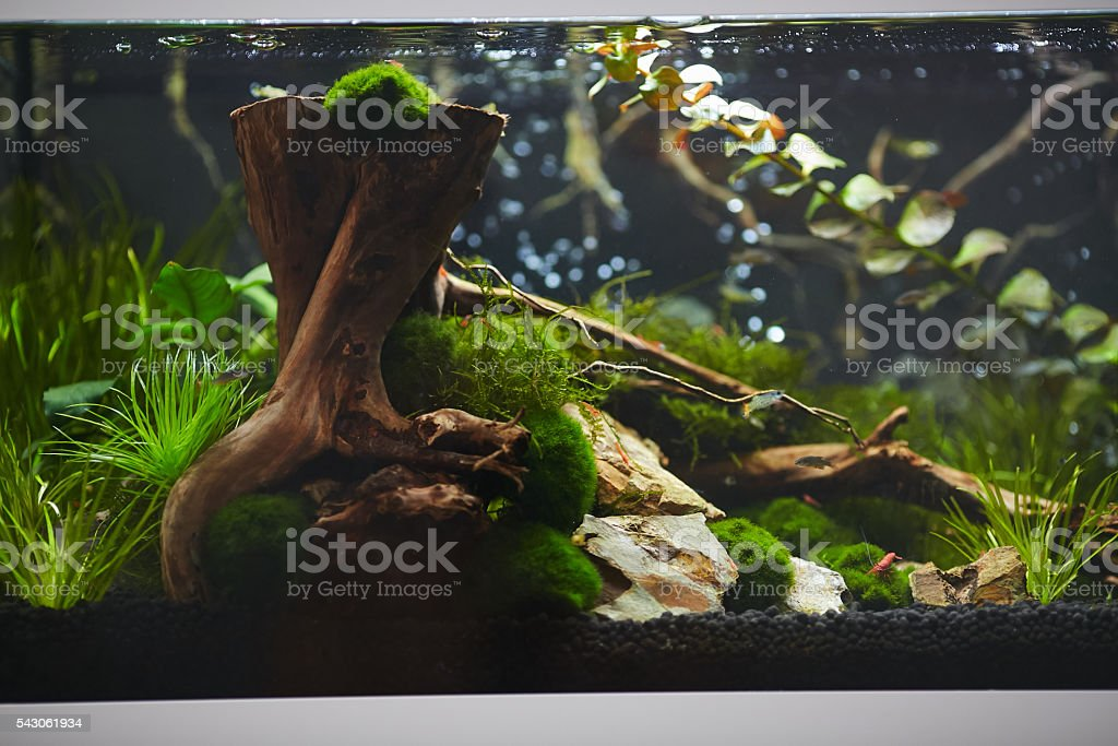 Shrimp aquarium Photo Collection stock photo