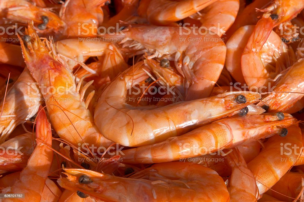 Shrimp background stock photo