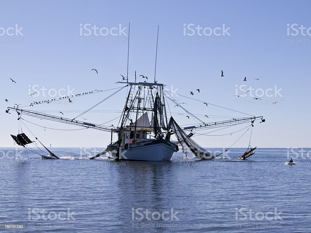 Shrimp Boat with Dolphin stock photo