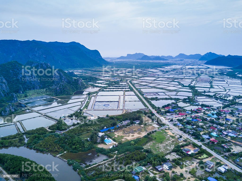 Shrimp farms from above stock photo
