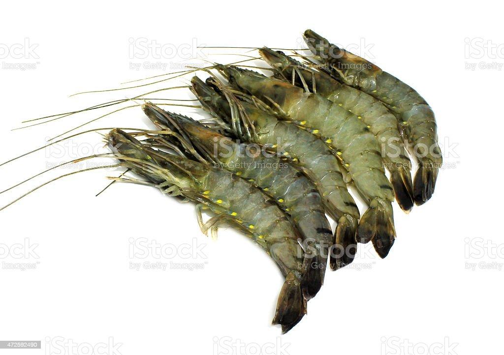 Crevettes isolé photo libre de droits