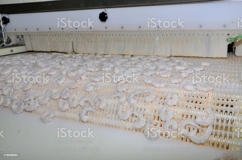 Shrimps are getting frozen from a machine stock photo