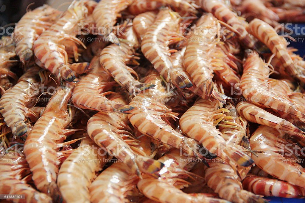Shrimps at the Dubai fish market stock photo