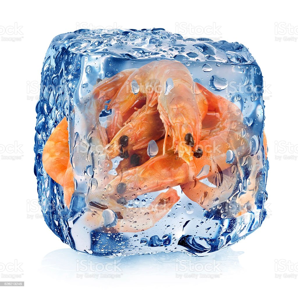 Shrimps in ice cube stock photo