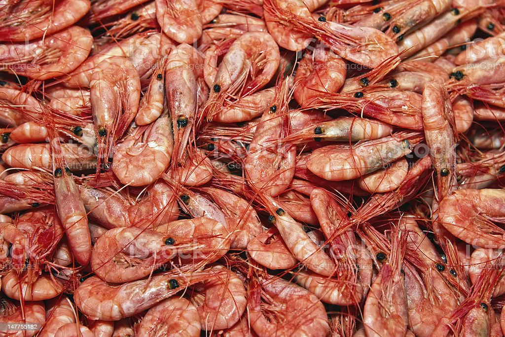 Shrimps. royalty-free stock photo