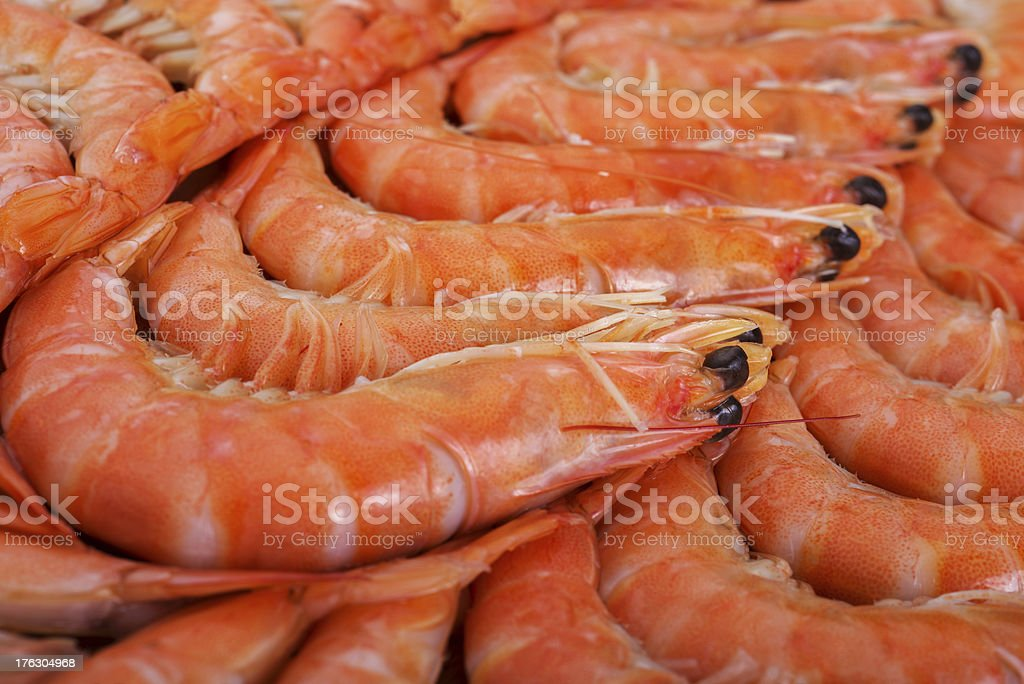 Shrimps royalty-free stock photo