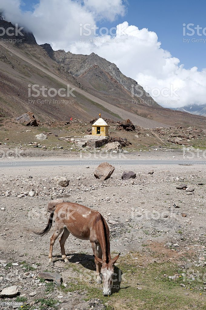 Shrine and Horse Grazing Northern India royalty-free stock photo